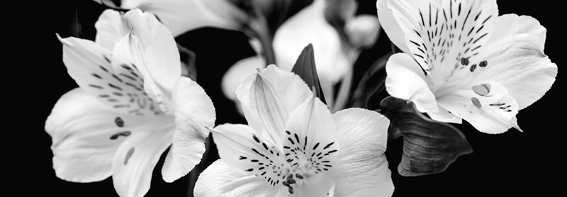 Image of lilies representing bereavement counselling